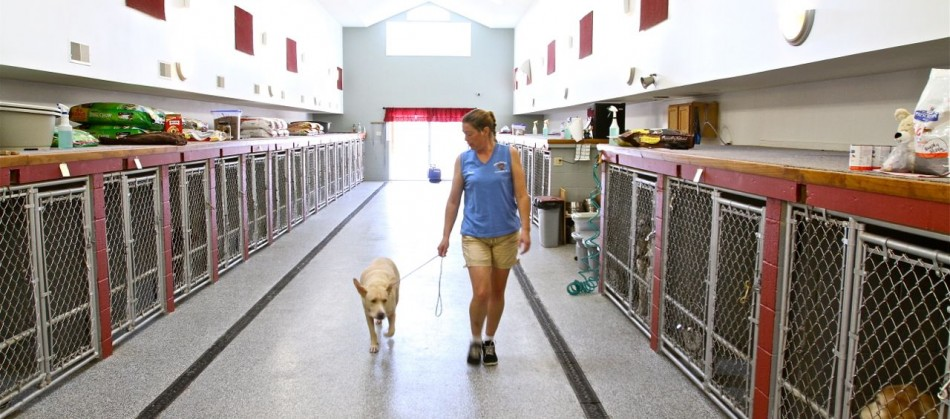 Brady Kennels is a clean and comfortable place for your pet, with separate facilities for dogs and cats