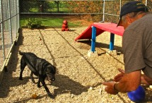Your pet will love spending time in the safe and secure play area at Brady Kennels
